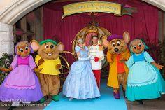 disneyland paris   cinderella   prince   charming   mice