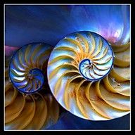 The Nautilus shell spiral is not a Golden spiral but has Golden Ratio proportions.  It is often shown as an illustration of the golden ratio in nature, but the spiral of a nautilus shell is NOT a golden spiral.  http://www.goldennumber.net/spirals/