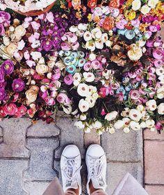 Spring Aesthetic, Planter, Plants Are Friends, Floral Photography, Flourish, Flower Power, Flower Arrangements, Florals, Cool Photos