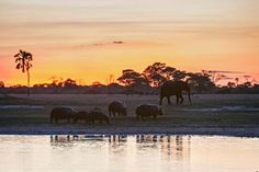 The Zambezi's Hwange River at sunset