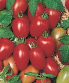 Cherry Tomato 'Sugary'
