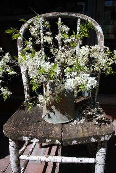 tattered chair with a blooming plant,love it.....