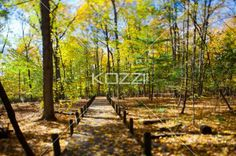 autumn trees and walkway. - Image of autumn trees and walkway.