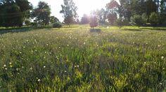 Back paddock weeds