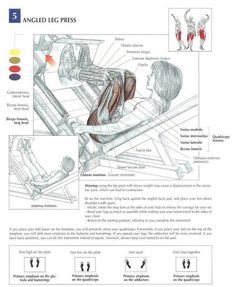Tha ANATOMY of Leg Press. The leg press can be used to evaluate an athlete's overall lower body strength (from knee joint to hip). the exercise works the