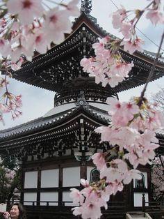 Temple behind sakuras