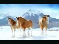 @Marisa McClellan Pennington Foster #bemorefestive #choosetobemorefestive▶ funny budwiser snowball fight horses - YouTube