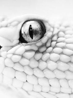 albinos snake