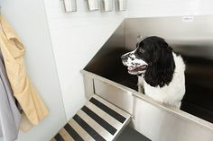 11 best dog grooming sinks images on pinterest bathroom sinks dog stainless steel dog grooming sinks for your pet solutioingenieria Image collections