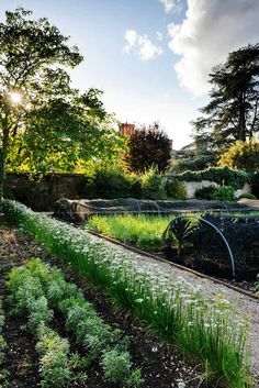 Step outside and take a stroll through the gardens of Belmond Le Manoir aux Quat'Saisons. Vertical Gardens, Back Gardens, To Infinity And Beyond, Luxury Hotels, Dream Garden, Garden Paths, Great Deals, Railroad Tracks, Trip Advisor