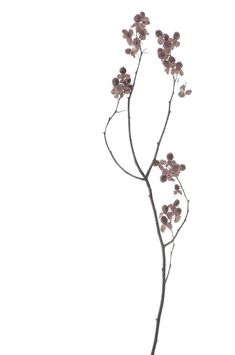trendy flowers red white nature on We Heart It Illustration Botanique, Botanical Illustration, Fall Flowers, Dried Flowers, Color Mauve, Plakat Design, Plant Drawing, Gras, Cool Plants