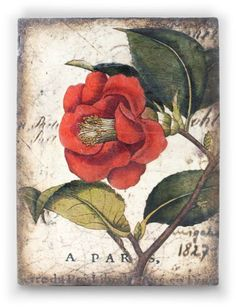 Red Camellia tile by artist Sid Dickens out of Vancouver Canada. Memory Blocks are hand crafted plaster, finished to a porcelain-like quality, cracked to create an aged look and feel.