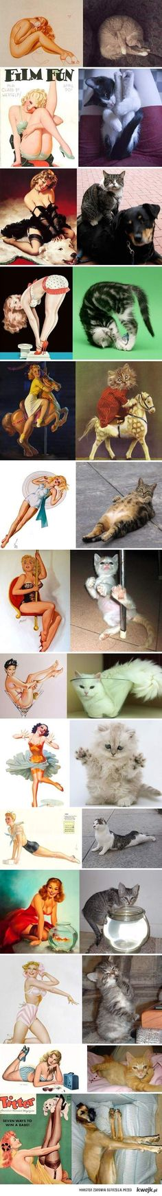Funny pictures about Cats that look like pin-up girls. Oh, and cool pics about Cats that look like pin-up girls. Also, Cats that look like pin-up girls. Crazy Cat Lady, Crazy Cats, I Love Cats, Cute Cats, Silly Cats, Doug Funnie, Grand Chat, Animal Pictures, Funny Pictures