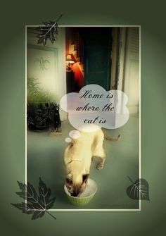 """Merlin cat home quote """"Home is where the cat is""""."""