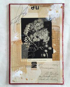 'Scarlet Flowering Gum' (eucalyptus ficifolia)  #collageart #leemckenna #leeamckenna
