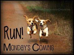 Run monday coming quotes monday monday quotes monday is coming Funny Animal Memes, Funny Animal Pictures, Funny Animals, Beagle Pictures, Funny Picture Quotes, Funny Quotes, Funny Memes, Pet Memes, Good Morning Good Night