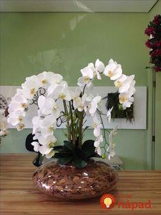 Odkedy som dala orchideu do skla, kvitne nepretržite už celé mesiace: Inak už nepestujem - najkrajšia dekoráciu, akú doma môžete mať! Orchid Flower Arrangements, Diy And Crafts, Bouquet, Floral, Garden, Flowers, Home Decor, Flower Arrangements, Home