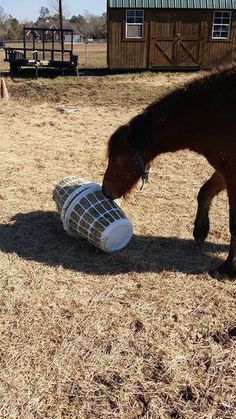 Pets Care - Slow hay feeder it is the Little short laundry baskets and you just wiring together The way cats and dogs eat is related to their animal behavior and their different domestication process. Horse Slow Feeder, Hay Feeder For Horses, Horse Paddock, Horse Hay, Toys For Horses, Horse Shelter, Horse Treats, Horse Stalls, Horse Tips