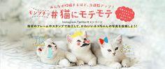 みんなが投稿するほど、当選数アップ! モンプチで#猫にモテモテ Instagram、Twitterキャンペーン 指定のフレームやスタンプで加工して、かわいいネコちゃんの写真を投稿しよう! Pet Pet, Flat Design, Asia, Banner, Concept, Website, Pets, Animals, Banner Stands