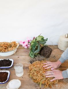 In this extract from Hanging Kokedama by Coraleigh Parker, we discover how to get started on the Japanese method of wrapping plants in moss, soil and string Indoor Garden, Garden Art, Indoor Plants, Japanese Plants, Bonsai Soil, Bloom Where Youre Planted, Vertical Garden Diy, Plant Art, Coir