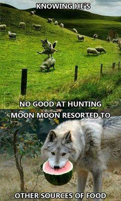 Lol moon moon
