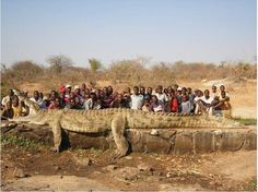 Giant Crocodile Caught In Zimbabwe - Shot by a hunter due to being considered a problem animal, it was killing full grown cow!