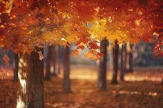 Decorated Mantel: Tuesday's Tumblr Favorites - Autumn 's Magic