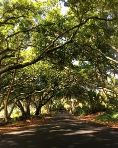 Hawaii Road Trip: The Enchanted Red Road in Puna on the Big Island
