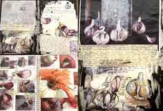 Garlic and Onion development and analysis- Sketchbook Pages- Lauren nurse