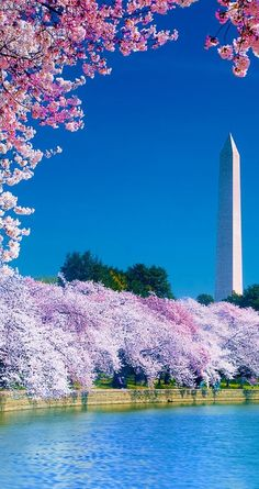 Cherry Blossom Festival on the Tidal Basin near Washington Monument in D.C. • photo: Don Lovett on FineArtAmerica