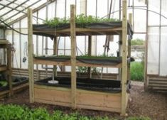 How to Build a Small Indoor Aquaponics System