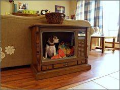 cama cachorro TV