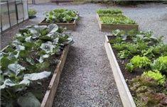 How to Start a Winter Gardening Club
