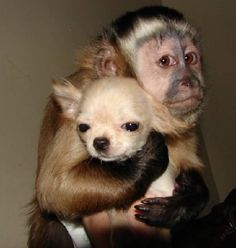 Some monkeys are obsessed with dogs and i think that is so adorable. That means monkeys care for other animals other than their kind.