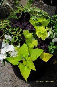 Gardening Gloves Mitre 10 Her Garden Gloves New World By Gardening