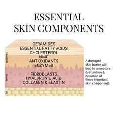 Your skin needs ALL these components and the loss of any could lead to premature aging, acne or pigmentation. Find a professional near you to learn how to protect your skin barrier and skin components! Skin Tips, Skin Care Tips, Skin Anatomy, Skin Clinic, Face Skin Care, Homemade Skin Care, Utila, Change, Natural Skin Care