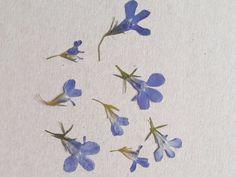 Real Lobelia flowers Pressed flowers Dried flowers Natural | Etsy Real Flowers, Dried Flowers, Blue Flowers, Lobelia Flowers, Pressed Leaves, Dry Leaf, Yellow Leaves, Plant Art, Winter Landscape