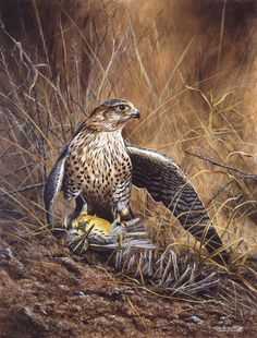 Perlin on meadowlark Acrylics on board Wildlife Art, Acrylics, Bald Eagle, Paintings, Board, Animals, Animales, Paint, Animaux
