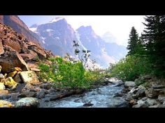 Relaxing River Sounds - Gentle River, Nature Sounds, Singing Birds Ambience - YouTube