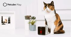 Petcube Item] Play Smart Pet Camera with Interactive Laser Toy. Remote Dog/Cat Monitoring with HD Video, Two-Way Audio, Night Vision, Sound/Motion Alerts. App-Enabled Pet and Home Safety Gadgets, Cat Camera, Home Monitoring System, Unique Housewarming Gifts, Security Cameras For Home, Pembroke Welsh Corgi, Hd 1080p, Night Vision, Pets