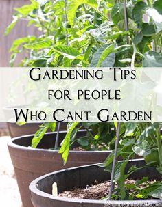 Gardening Tips for People Who Can't Garden Plants die because gardening isn't easy. If you feel like the world's worst gardener, enjoy these gardening tips [. Easy Garden, Lawn And Garden, Garden Ideas, Garden Inspiration, Gardening For Beginners, Gardening Tips, Gardening Books, Starting A Garden, Seed Starting