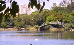 Pesquisa verifica contaminação de lagos de parques via análises de metais pesados em peixes