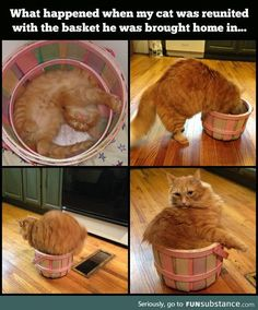 Reunited with his old basket
