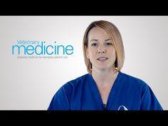 Here's a twist: The lastest updates on gastric dilatation-volvulus (GDV) - #Veterinary Medicine - dvm360