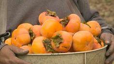 Odborník vie, prečo 8-ročné hurmikaki stále nekvitne Pesto, Fruit, Vegetables, Food, Gardening, Vegetable Recipes, Eten, Garten, Veggie Food