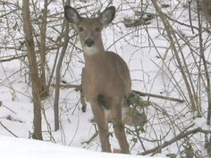 This is my favorite deer I captured with my camera
