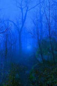 Forest Trail - Blue Ridge Mountains, Virginia