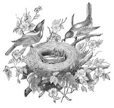 bird nest tattoo - Google Search