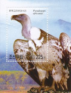 Stamp: White-backed Vulture (Pseudogyps africanus) (Korea, North) (Birds) Mi:KP…