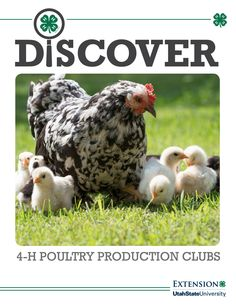 Discover 4-H Poultry Production Club